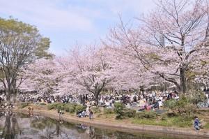 2017年関東桜 開花予想